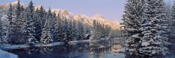 Canmore Photograph - Trees Covered With Snow, Policemans by Panoramic Images