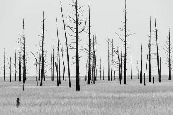 Photograph - Trees Die Off by Louis Dallara