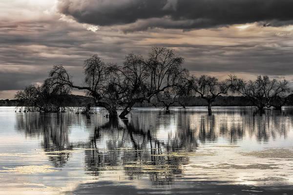 Photograph - Trees Dream by Edgar Laureano