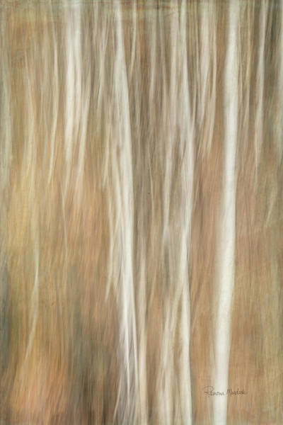 Digital Art - Trees Ethereal Thicket by Ramona Murdock