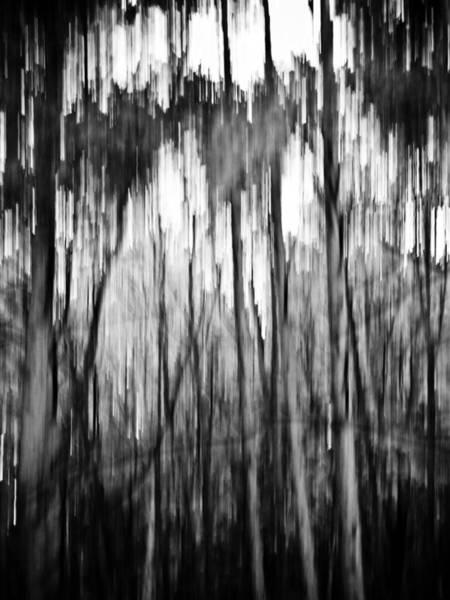 Vegetal Photograph - Trees by Felix M Cobos