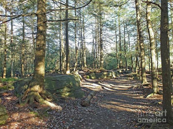 Sullivan County Photograph - Trees Growing On Top Of Boulders - Ricketts Glen by Cindy Treger