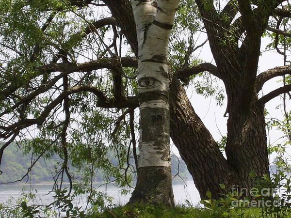 Birch River Photograph - Trees Have Eyes by Deborah Selib-Haig DMacq