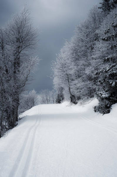 Trees Hills And Snow Art Print