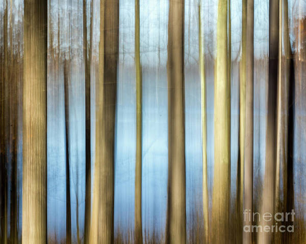 Photograph - Trees by Rod Best