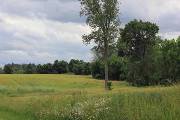 Photograph - Trees In A Field by Angela Murdock