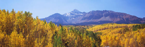 Telluride Photograph - Trees In A Forest With Mountain Range by Panoramic Images