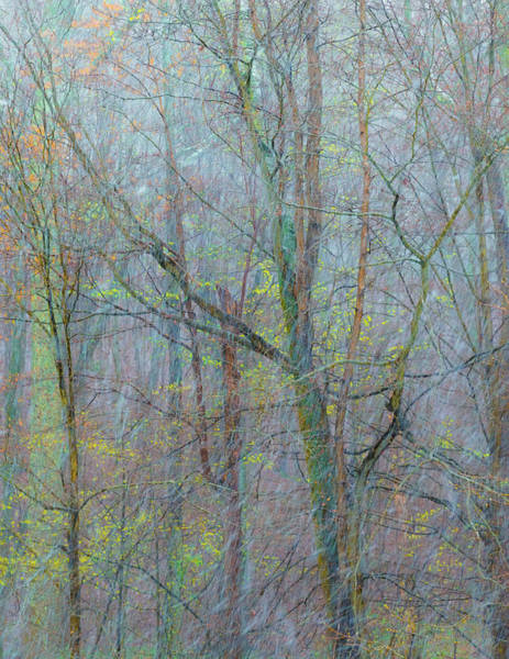 Snowstorm Wall Art - Photograph - Trees In A Snowstorm by Joseph Smith