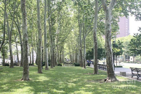Between The Trees Photograph - Trees In Brooklyn Bridge Park by John Telfer