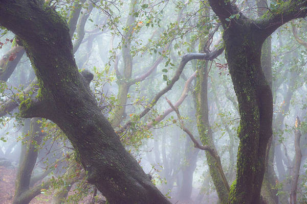 Photograph - Trees In Fog by Alexander Kunz