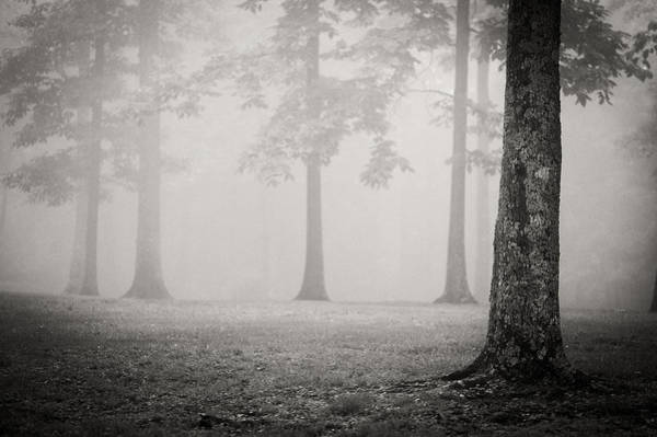 Photograph - Trees In Fog - Bw by Joye Ardyn Durham