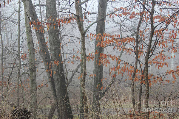 Photograph - Trees In Fog by Karen Adams