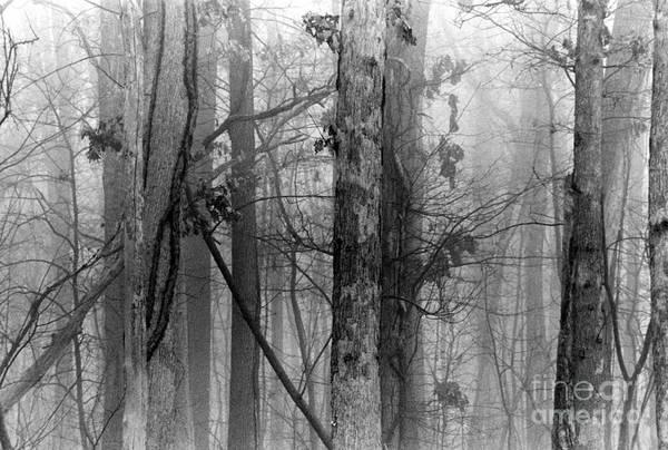 Black Buck Painting - Trees In Fog by Pamela Parsons