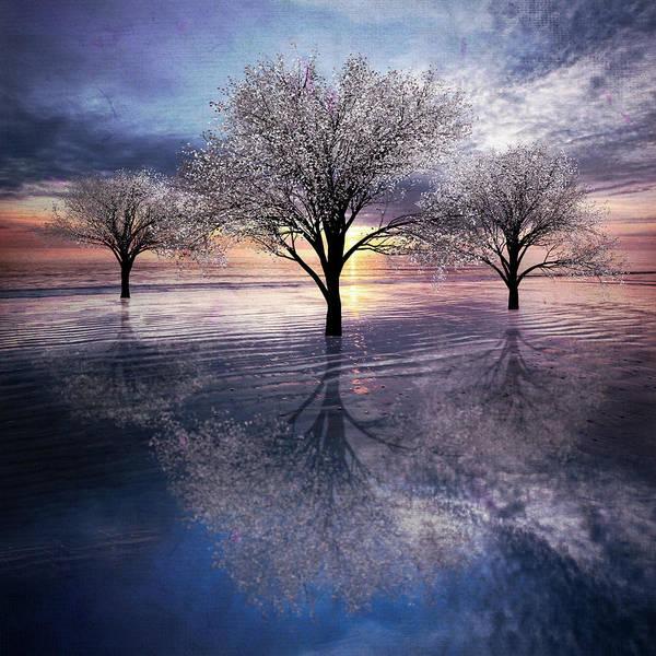 Photograph - Trees In Lavender  by Debra and Dave Vanderlaan