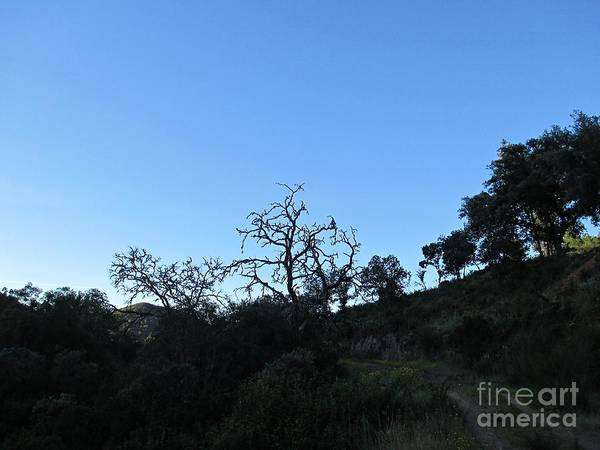 Photograph - Trees In Nerva by Chani Demuijlder