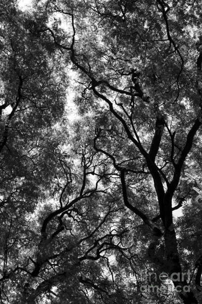 Photograph - Trees In Park - Large by Balanced Art