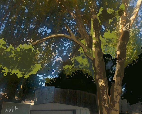 Digital Art - Trees In Park by Walter Chamberlain