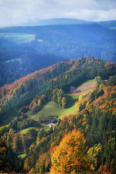 Photograph - Trees In Schwarzwald Black Forest Germany by Matthias Hauser