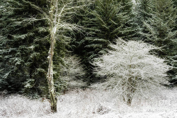 Photograph - Trees In Snow by Thomas R Fletcher