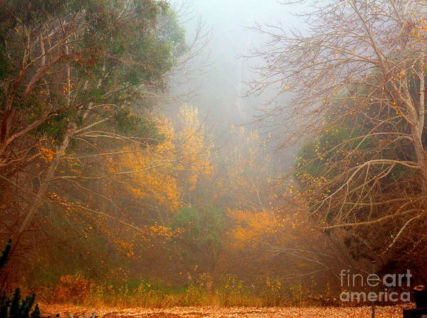 Photograph - Trees In The Mist by Elaine Teague