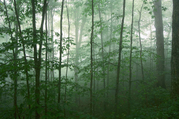 Photograph - Trees In The Mist by Joye Ardyn Durham