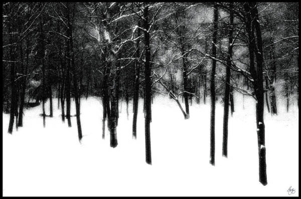 Photograph - Trees In The Mist by Wayne King