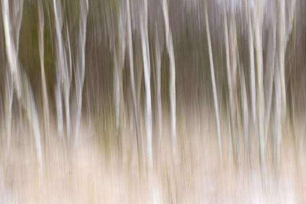 Fn Photograph - Trees In The Snow, Goldenstedt, Germany by Willi Rolfes