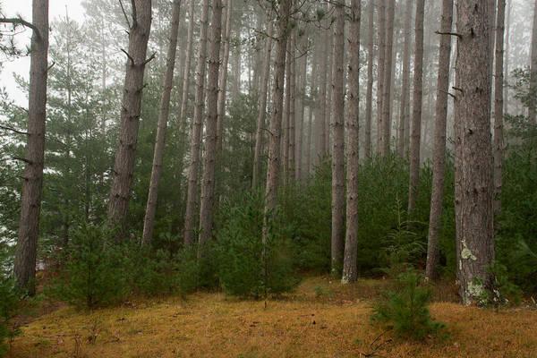 Photograph - Trees On A Foggy Autumn Day 1 by Nancy De Flon