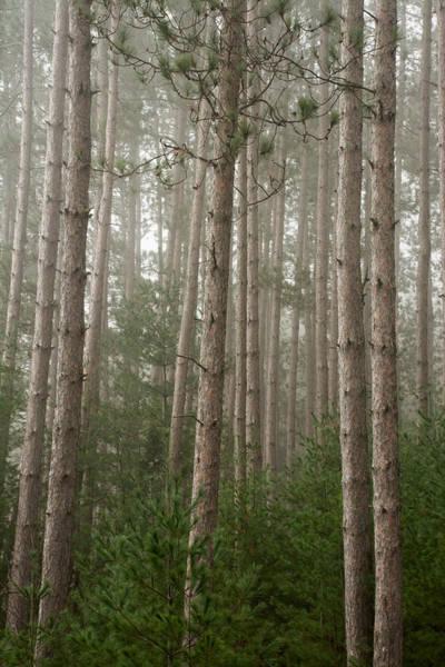 Photograph - Trees On A Foggy Autumn Day 2 by Nancy De Flon