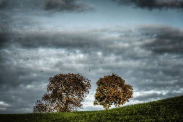 Wall Art - Photograph - Trees On A Leash by Rabiri Us