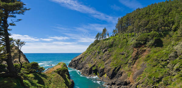 Heceta Head Lighthouse Photograph - Trees On A Mountain, Heceta Head by Panoramic Images