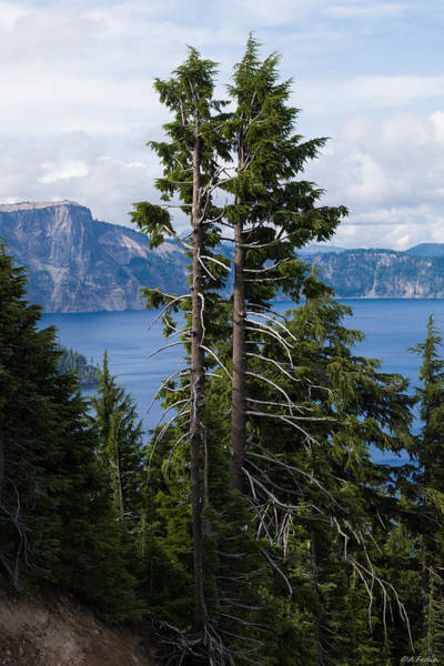 Photograph - Trees On Crater Lake Oregon State Usa by Alexander Fedin