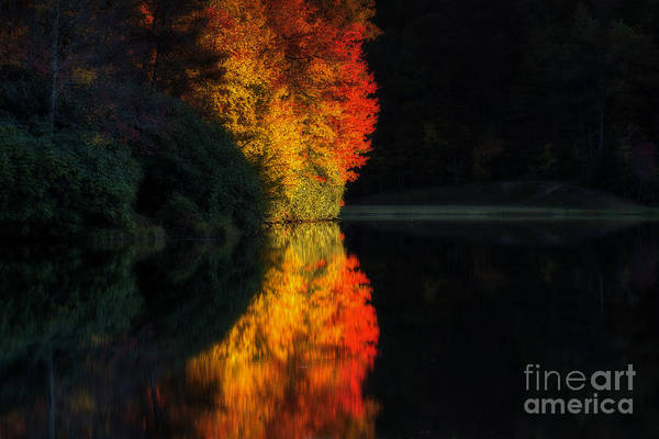 Photograph - Trees On Fire by Dan Friend