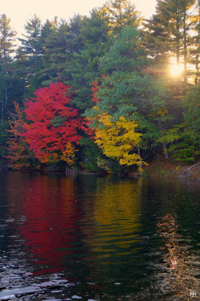 Photograph - Trees On Fire by John Meader