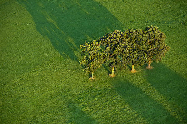 Photograph - Trees On Green by Heiko Koehrer-Wagner