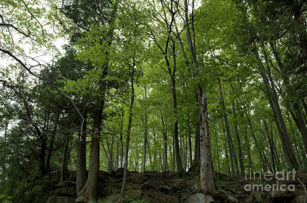 Photograph - Trees On The Edge by Kathi Shotwell