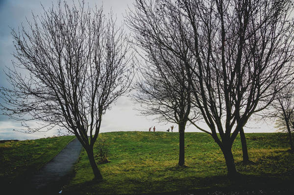 Photograph - Trees On The Hill by Edyta K Photography