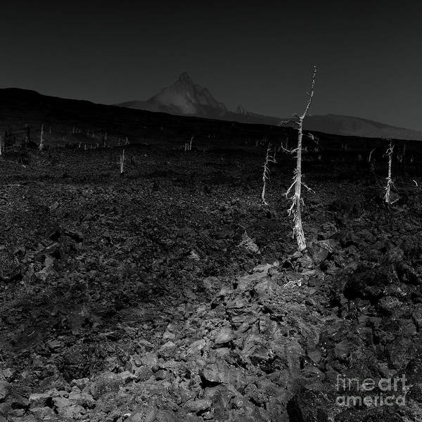 Awe Photograph - Trees On The Lava Field by Masako Metz