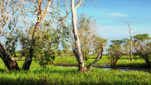 Photograph - Trees On Yellow Water, Kakadu N P by Lexa Harpell