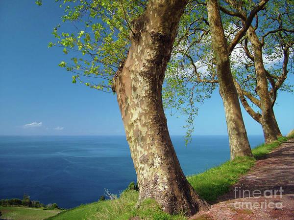 Wall Art - Photograph - Trees Overlooking The Ocean by Gaspar Avila