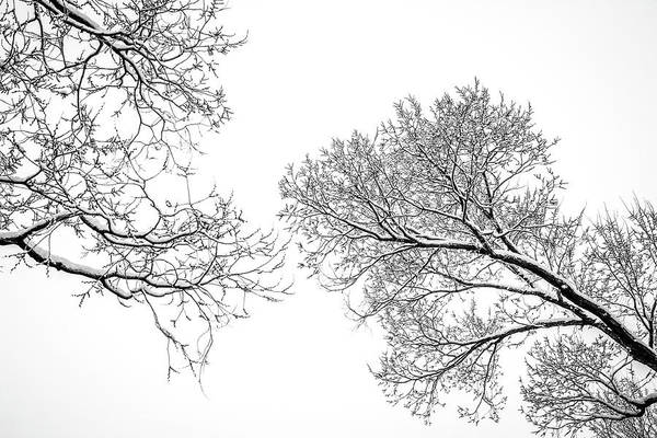 Photograph - Trees Reaching by Marilyn Hunt