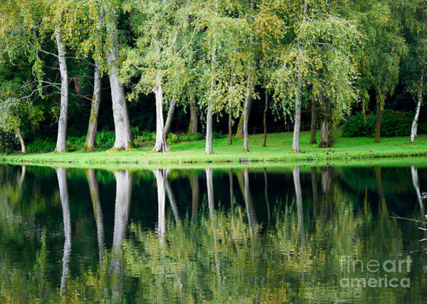 Photograph - Trees Reflected In Water by Colin Rayner