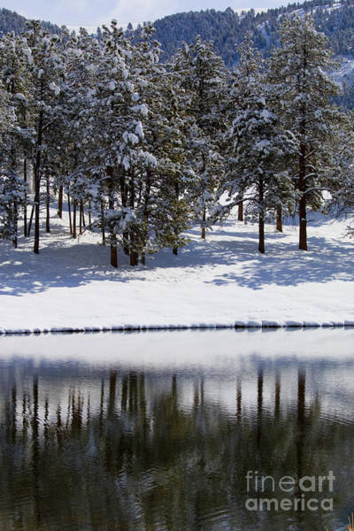 Photograph - Trees Reflecting In Duck Pond In Colorado Snow by Steve Krull