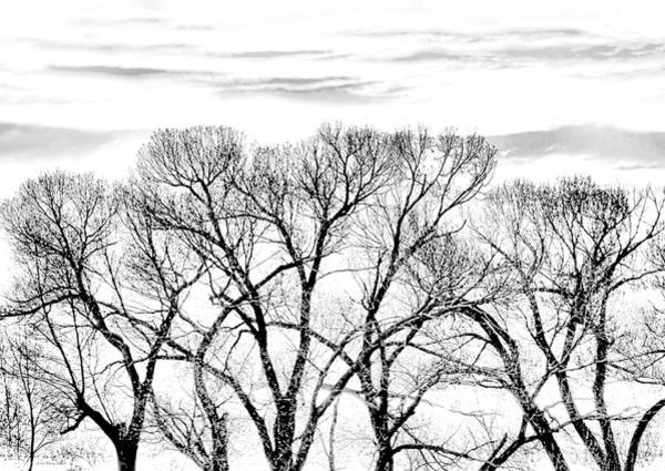 Wall Art - Photograph - Trees Silhouette Black And White by Jennie Marie Schell