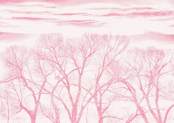 Wall Art - Photograph - Trees Silhouette Pink by Jennie Marie Schell