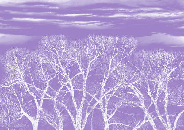 Wall Art - Photograph - Trees Silhouette Purple by Jennie Marie Schell