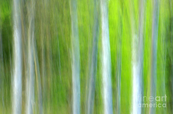 Green Photograph - Trees by Silke Magino