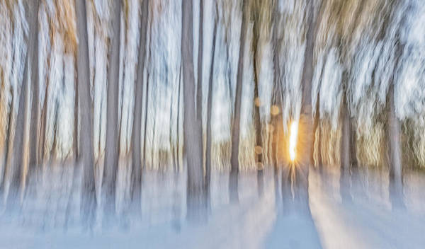 Henniker Photograph - Trees, Snow And Golden Light Abstract by Scott Snyder