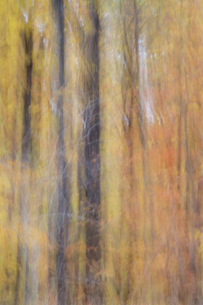 Photograph - Trees by Stewart Helberg