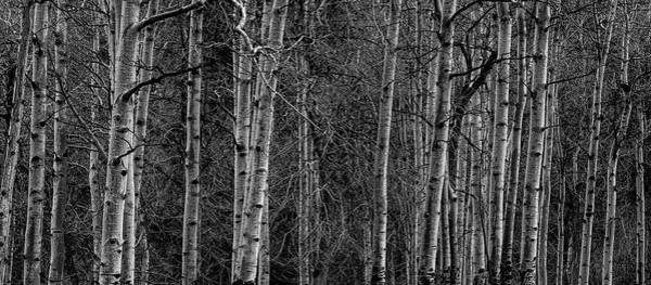 Wall Art - Photograph - Trees Trees And More Trees by C B